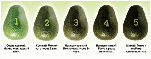Авокадо выбор
