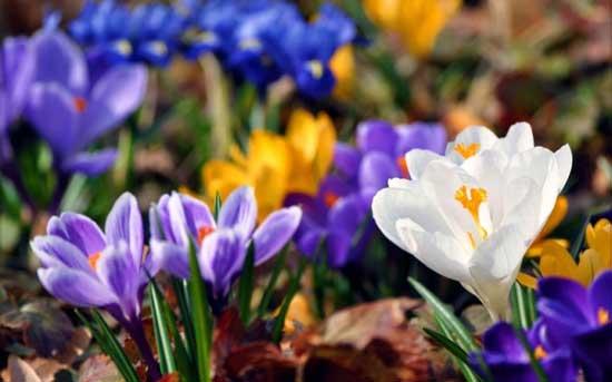 Весна конкурс комментаторов