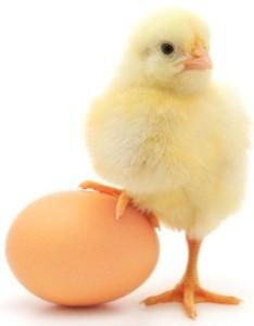 Переедание яйцо