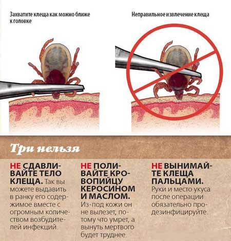 klesch-ukusy-nasekomyx