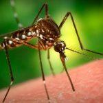 Как быть, если вас укусило насекомое?