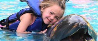 Дельфинотерапия - какие проблемы могут вылечить дельфины?