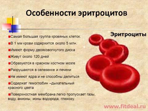 Причины анемии кровопотеря