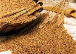 Пшеничная клетчатка для похудения