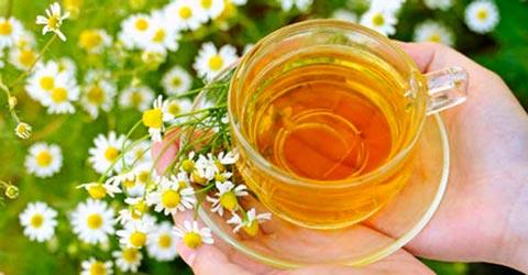Травы для печени, лечение, очищение, рецепты чаев