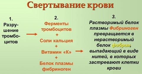 свертывание крови витамин к1