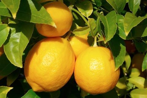 Как выбирать лимоны