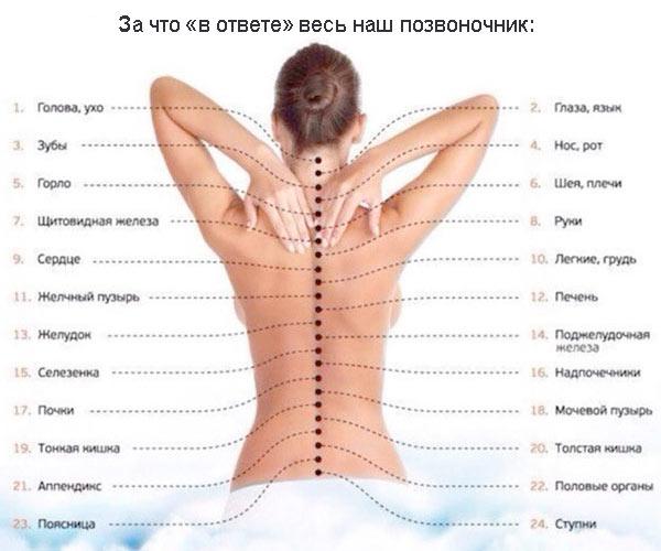 Боль в спине исчезает после зарядки