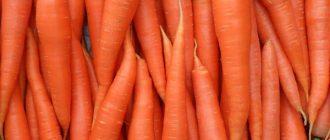 Польза и вред моркови, ее состав и лечебные свойства