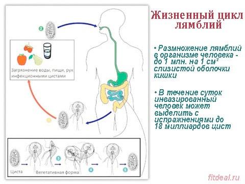 Симптомы лямблий у взрослых и детей, лечение