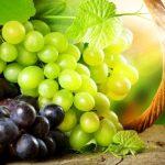 Виноград: все о пользе и вреде, лечебных свойствах и составе вкусного лакомства