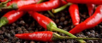 Польза и вред красного острого перца. Рецепты лечения