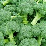 Брокколи: польза и вред. Как ее правильно выбирать, готовить и хранить?