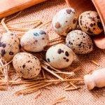 Перепелиные яйца – уникальный комплекс здоровья!