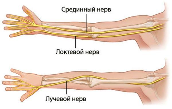 лучевой локтевой нерв