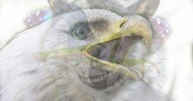 Ответы на психологический тест: какое животное Вы видите на картинке?